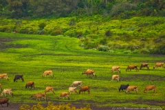 green-pastures