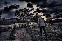 Koos; the shepherd of Stanford