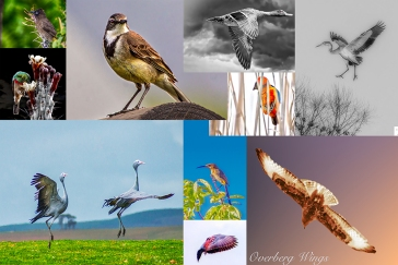 birds overberg