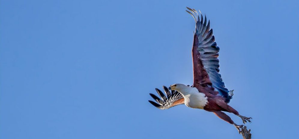 cropped-9mei19fisheagle.jpg