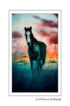 5april19pg-horse