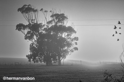 1june20misty-sunrise-bw